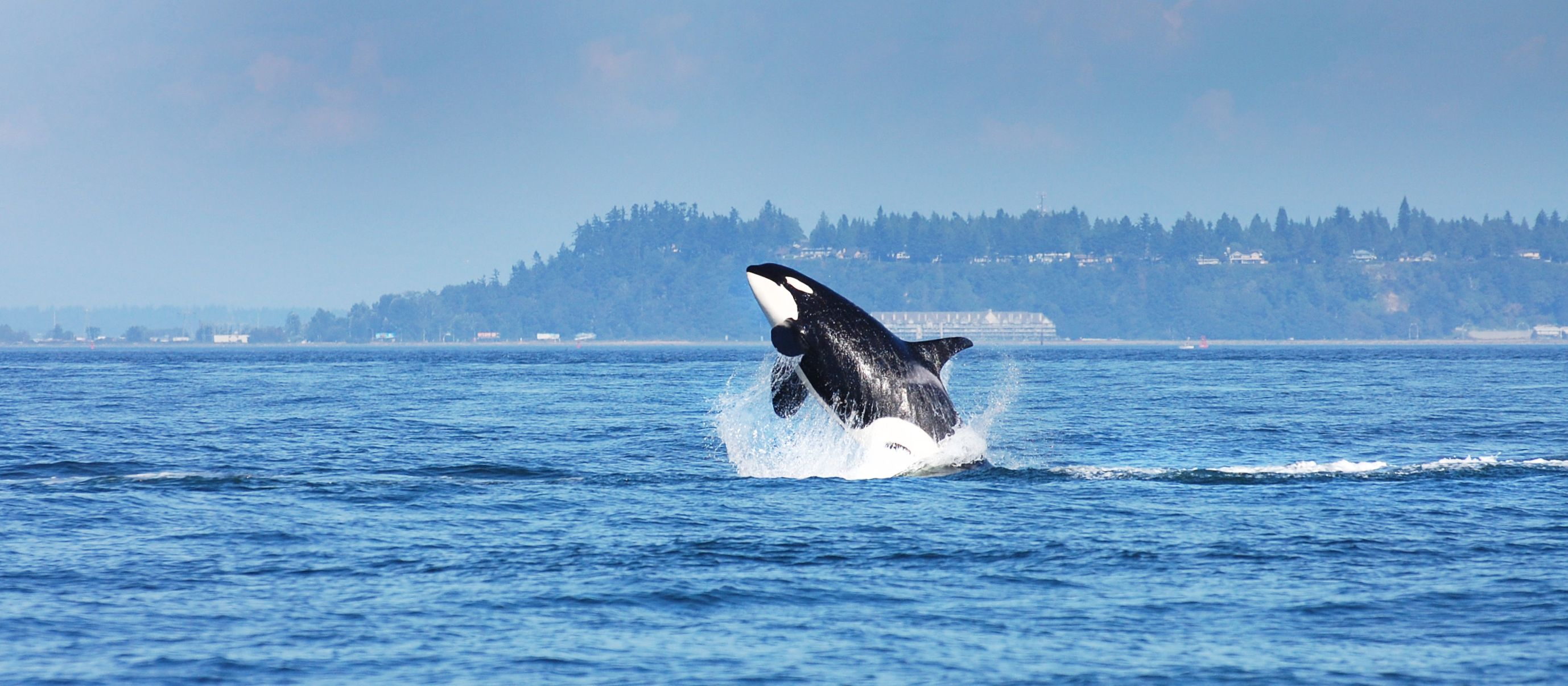 Whale watching in Vancouver, British Columbia