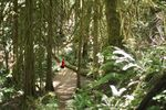 Coastal Rainforest Adventure