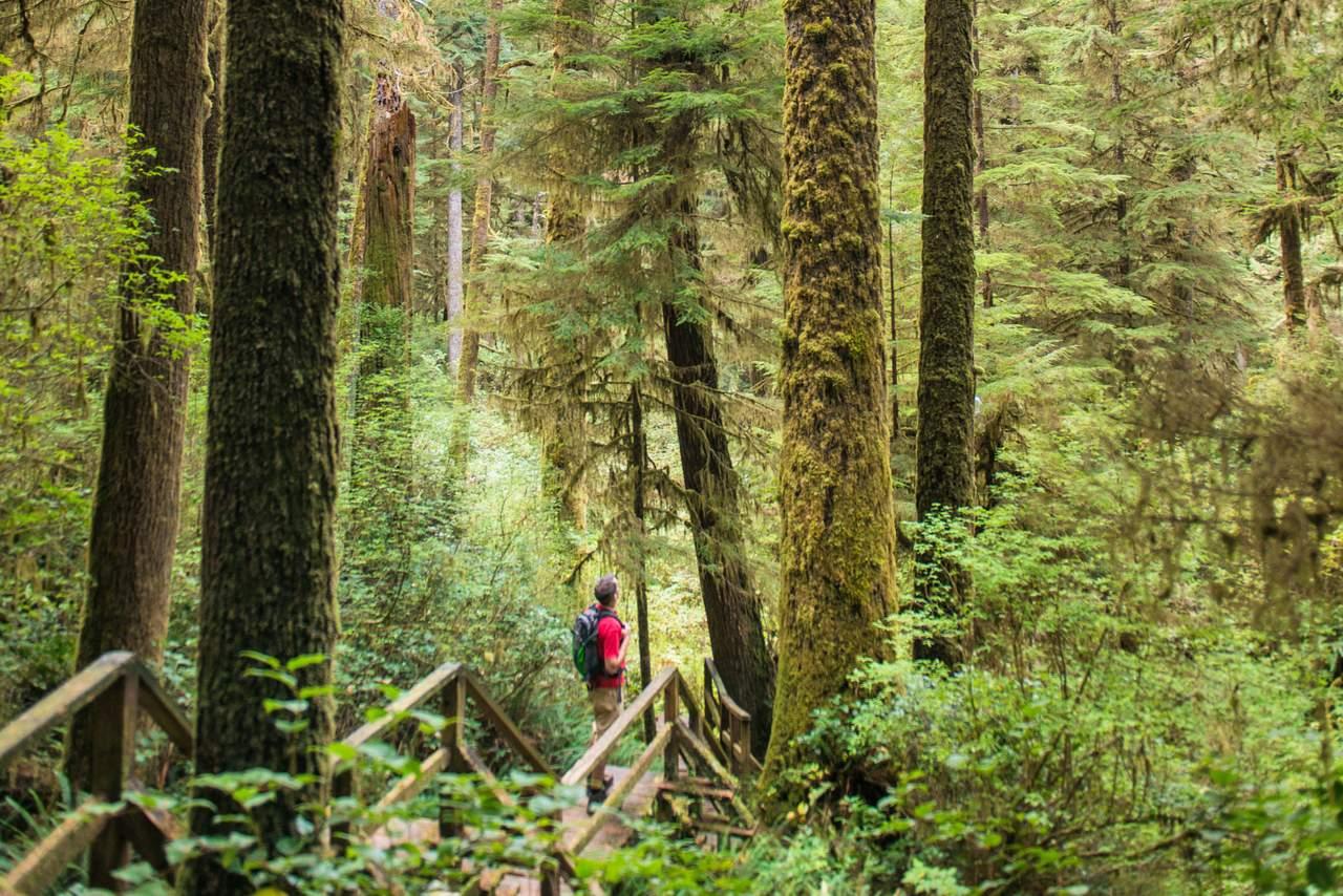 Mann im Wald des Pacific Rim Nationalpark in British Columbia
