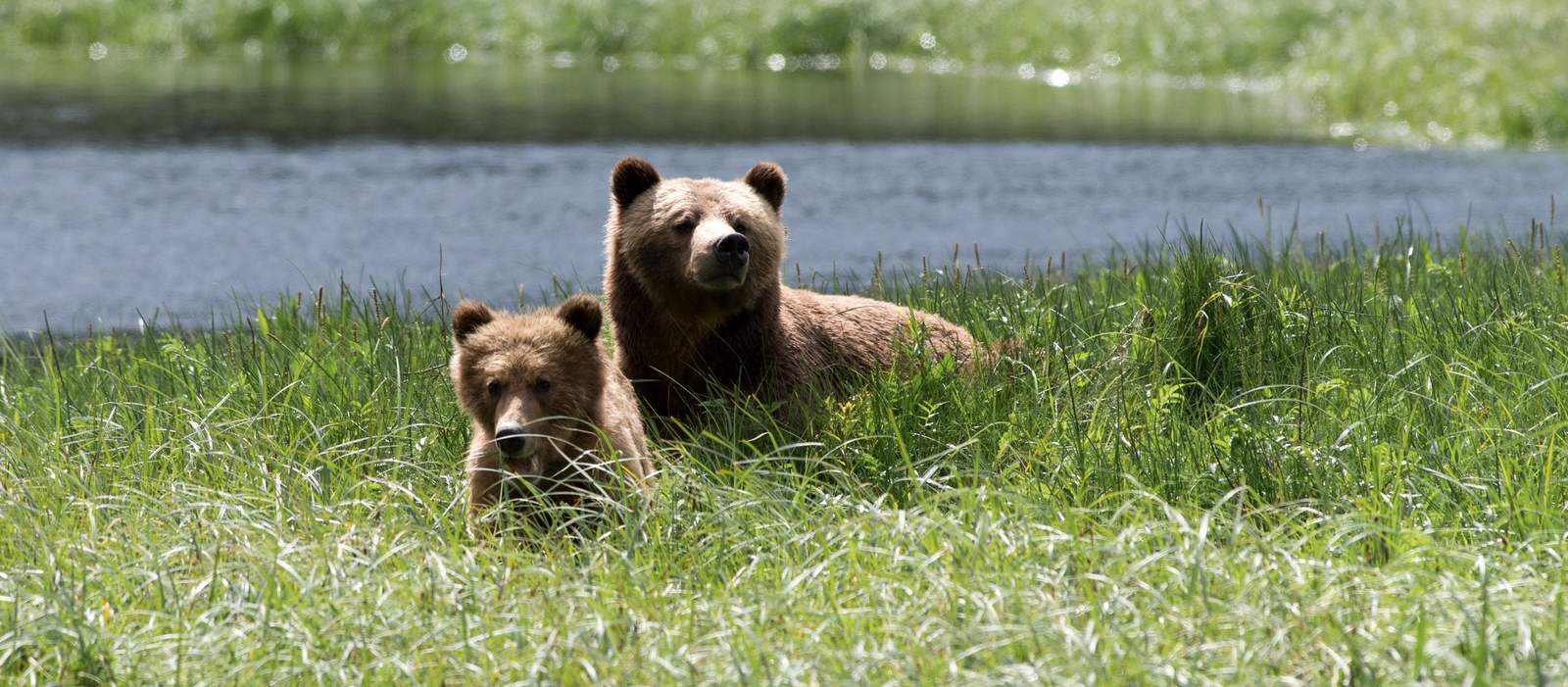 Bärenmutter mit Kind beim Kingfisher Wilderness Adventure