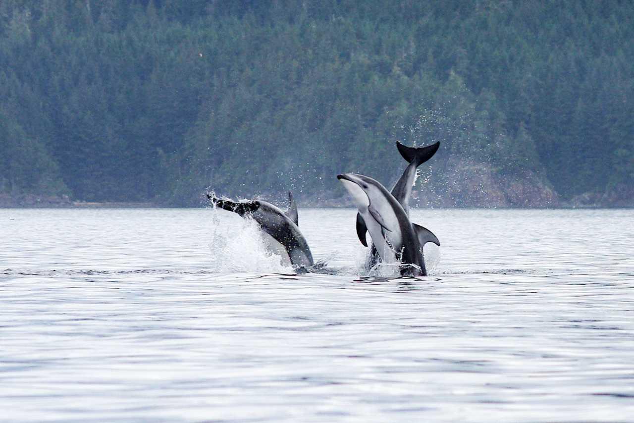 Delfine beim Kingfisher Wilderness Adventure