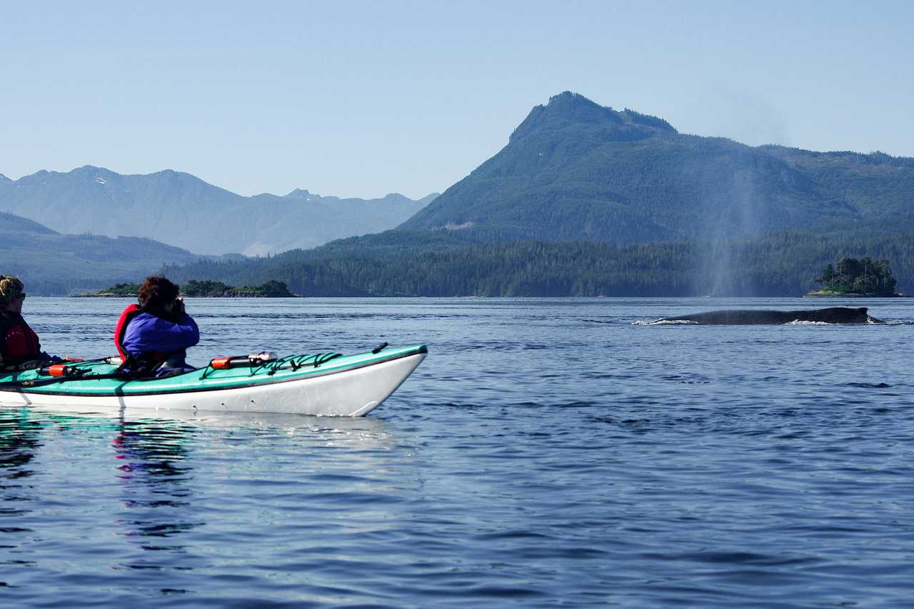 Kajaktour beim Kingfisher Wilderness Adventure