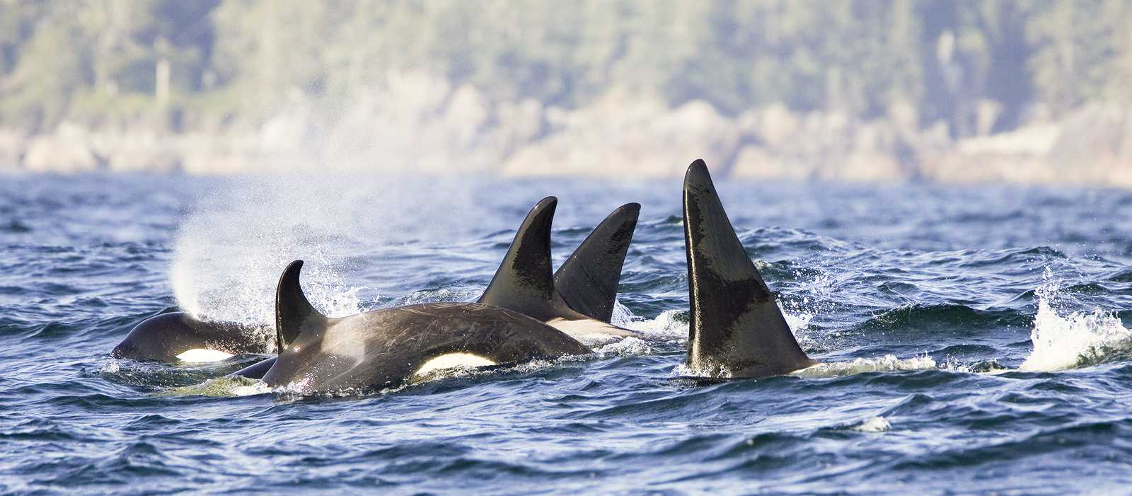 Whale and Bear Watching Tour in Tofino, Kanada