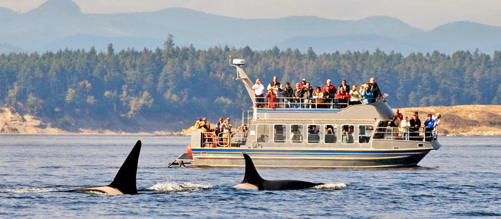 Whalewatching bei Victoria