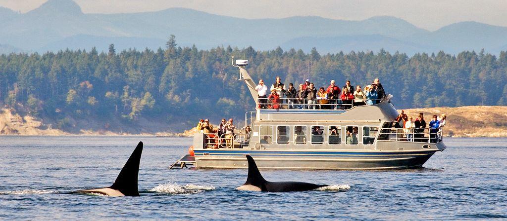Whalewatching bei Victoria