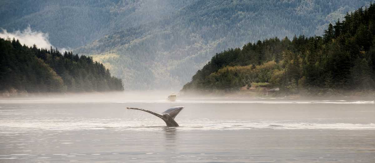 Whale Watching vor Sonora Island