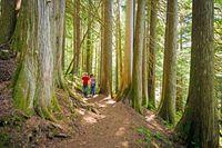Wandern entlang alter Zedern in Whistler