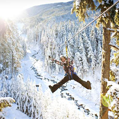 Zipline Bear Tour Winter in Whistler, British Columbia