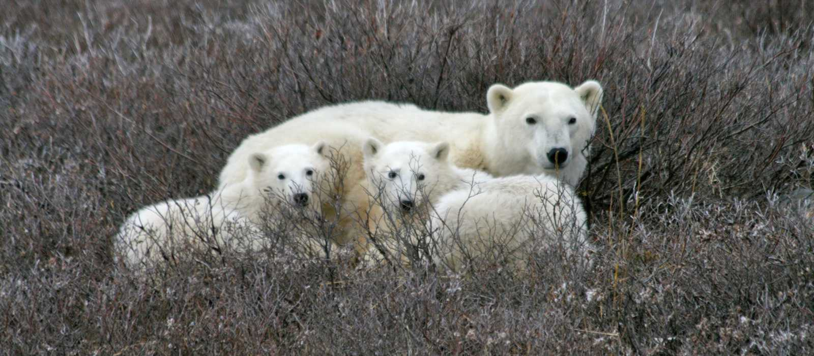 Hey, wir woll´n die Eisbärn sehn!