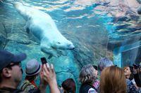 Journey to Churchill im Zoo in Winnipeg
