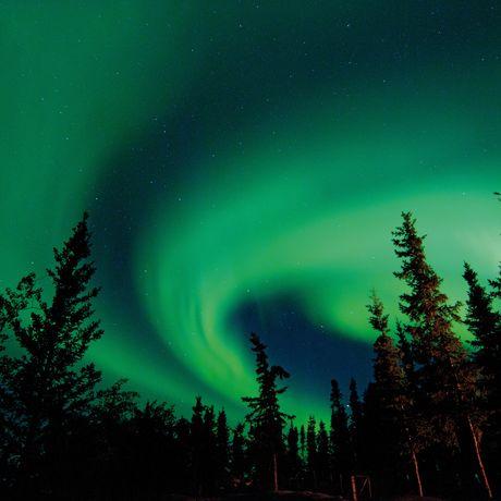 Polarlichter über dem Wald