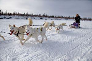 Hundeschlittentour im Kanadas Norden