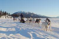 Hundeschlitten-Abenteuer Yukon