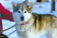 Winterwonderland Yukon