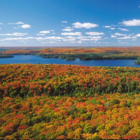 Herbst im Algonquin Provincial Park
