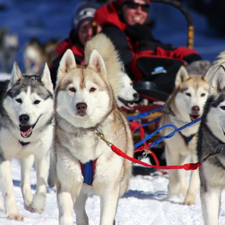 Hundeschlittentour in Haliburton