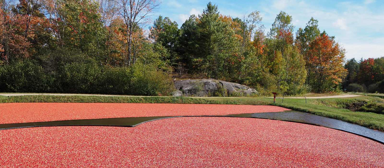 Das Cranberry-Paradies der Muskoka Lakes & Farm Winery in Ontario