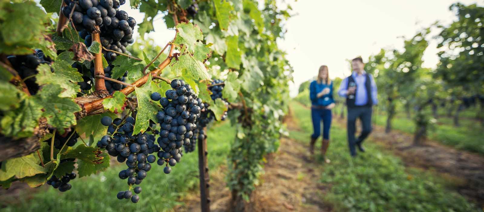Peller Estates Winery