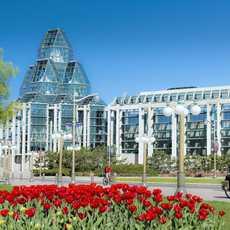 Tulpen vor der Nationalgalerie von Kanada in Ottawa
