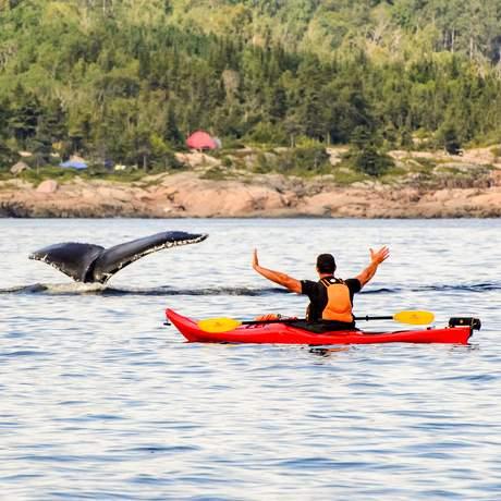 Walbeobachtung beim Kajakfahren in Manicouagan, Québec