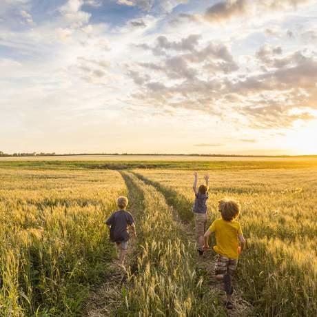 Kinder im Weizenfeld, Saskatchewan