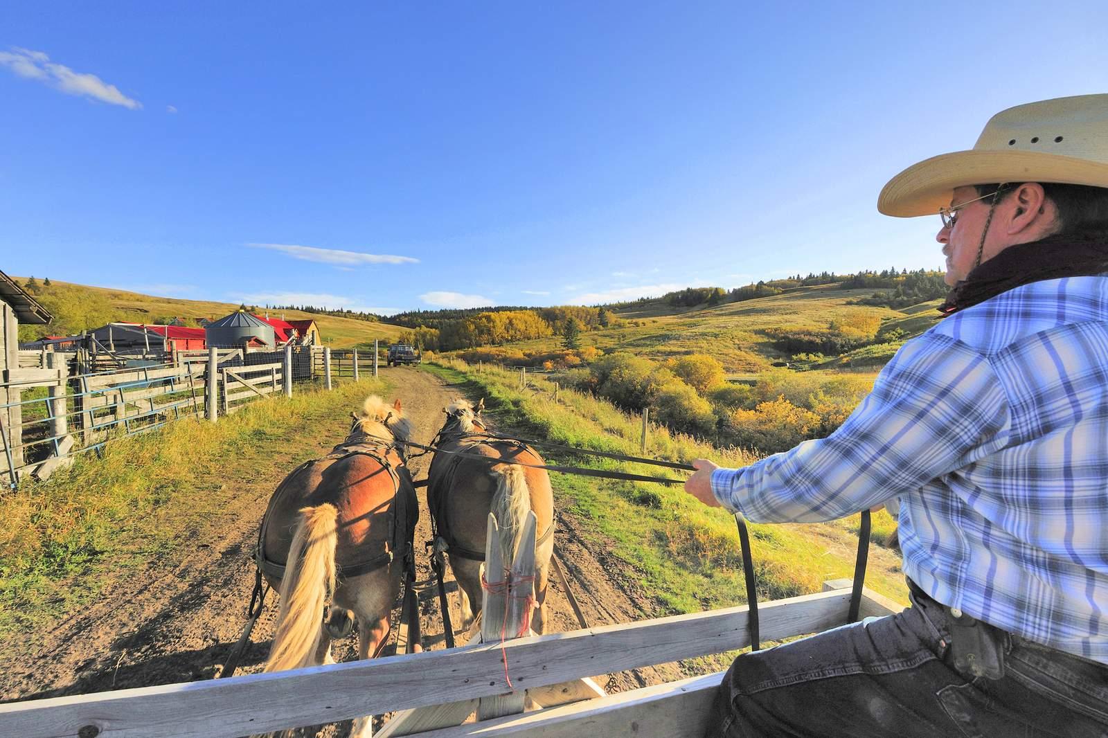 Kutschfahrt mit dem Pferdewagen