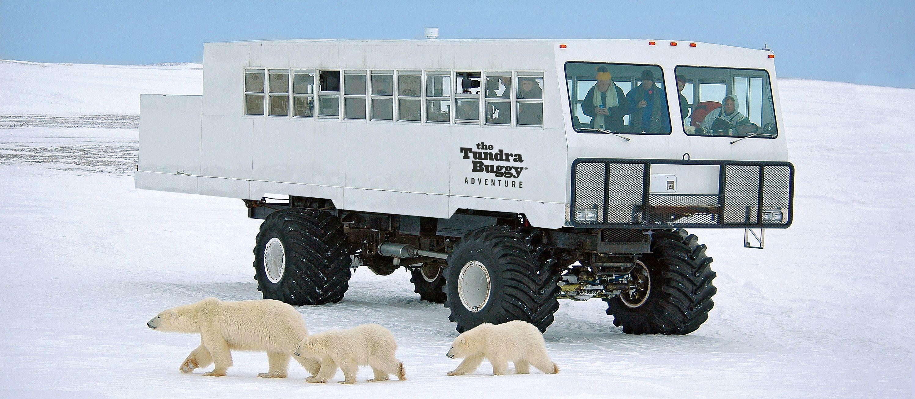 Eisbärenmutter mit zwei Jungtieren