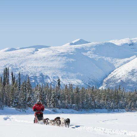Hundeschlitten im Schnee