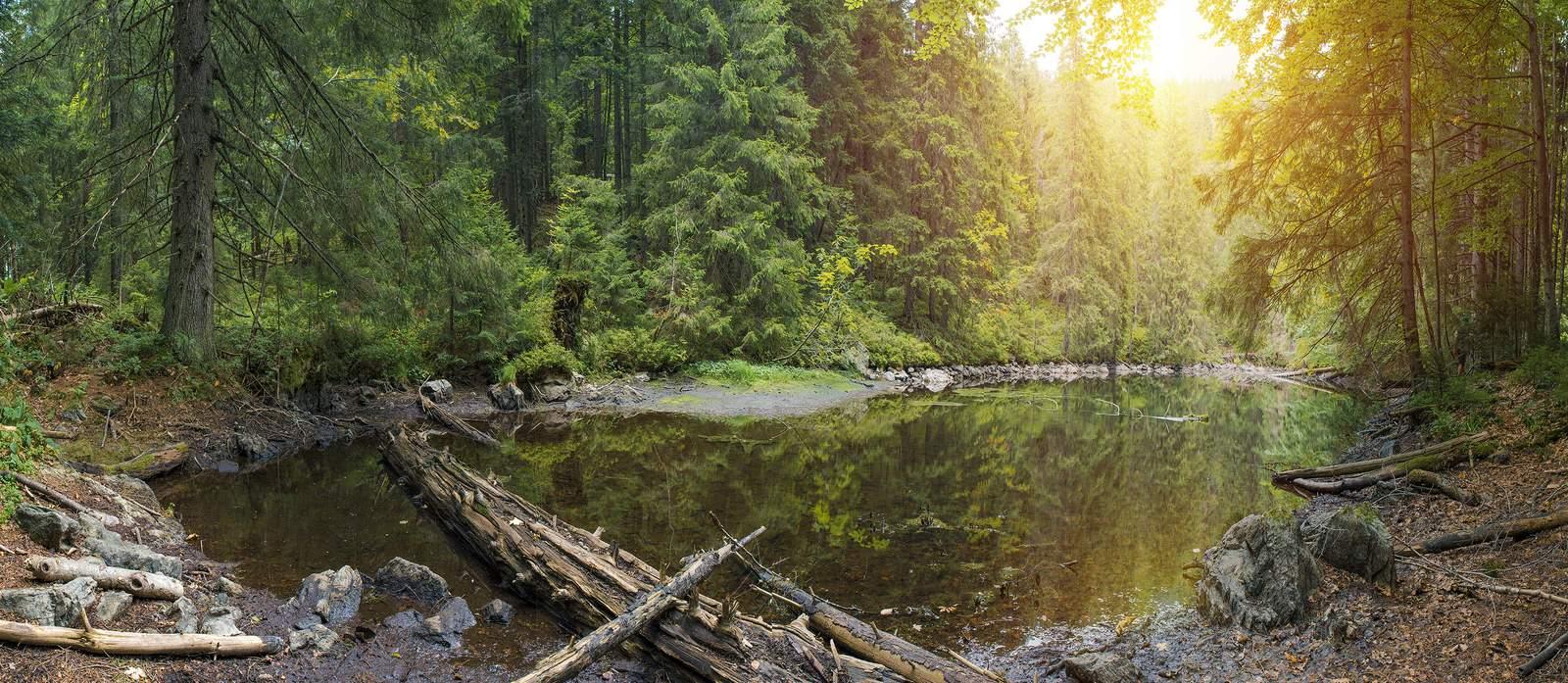 Ein See inmitten eines Waldes