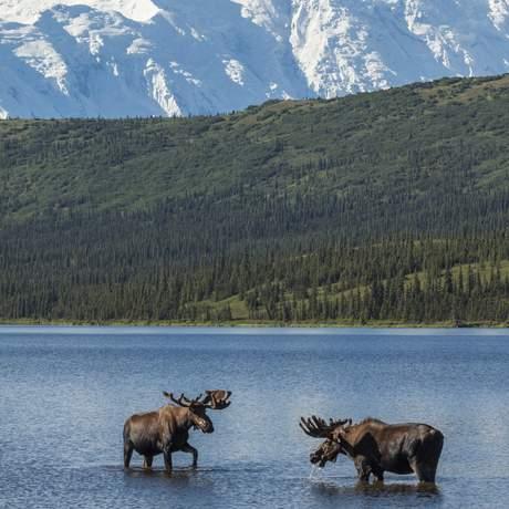Zwei Elche stehen im Wonderlake vor einem beeindruckenden Bergpanorama