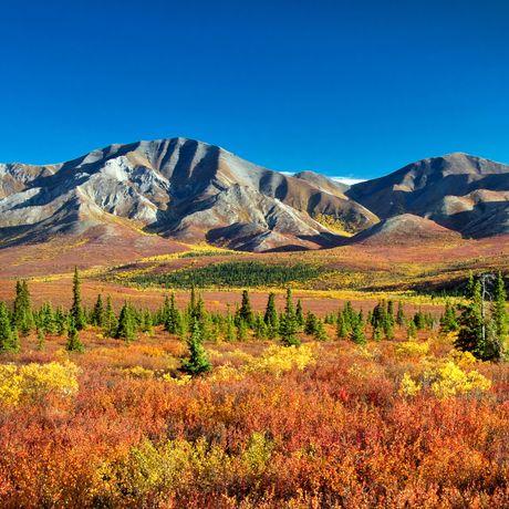 Autumnal Denali Nt Park Scenery with mountain range