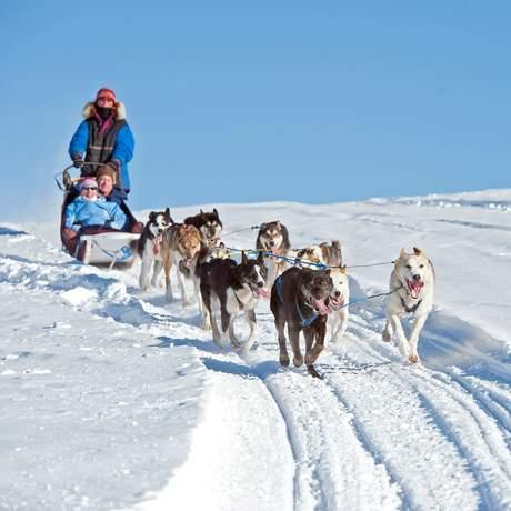 Auf Hundeschlittentour bei Fairbanks