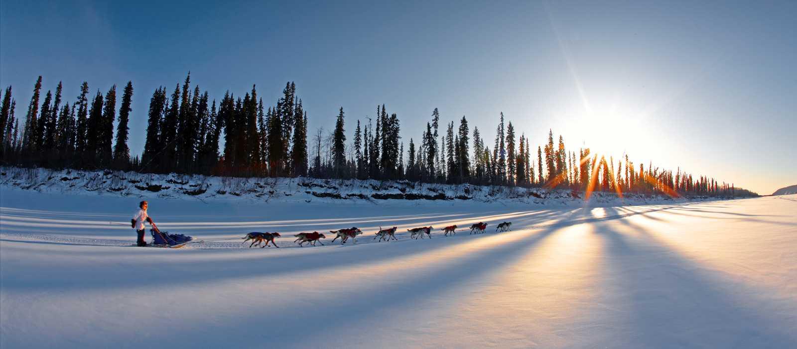 Hundeschlittenfahrt bei Galena, Alaska