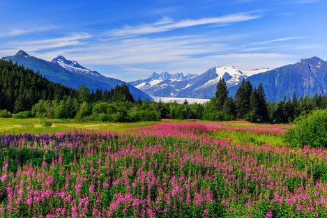 Aussicht auf den Mendenhall Glacier in Juneau, Alaska