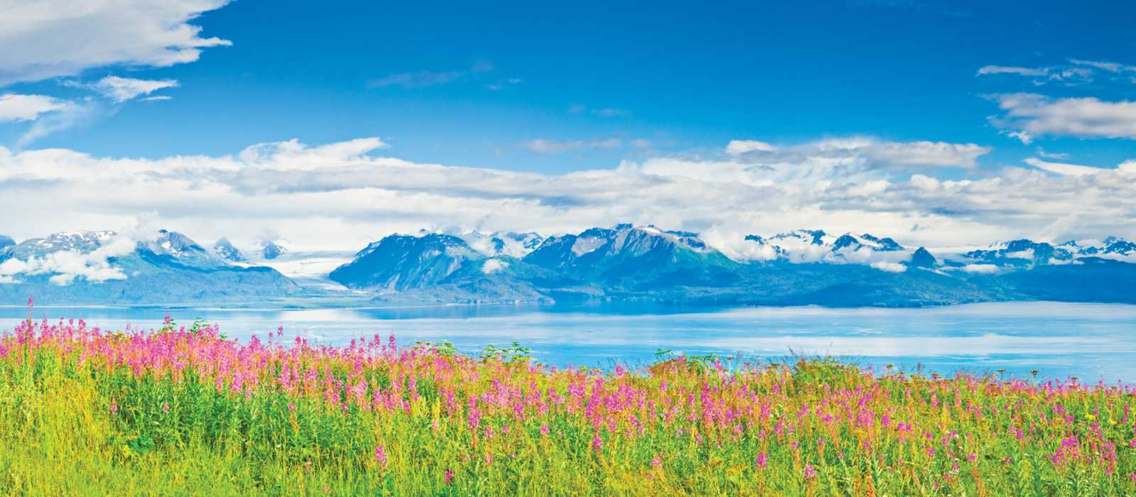 Alaska, summer scenic, Kenai Peninsula, fireweed, Kachemak Bay, and Grewingk Glacier from Homer