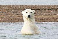 Braun- & Eisbären erleben