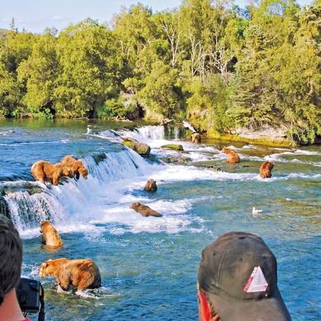 Baeren an den Brooks Falls