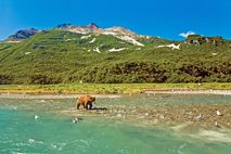 Katmai Nationalpark: Bären im Geographic Harbor