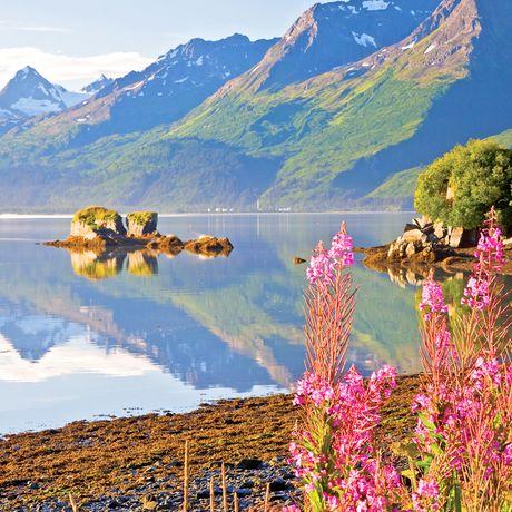 Alaska, Coastal Scenic, Summer Scenic, Valdez, fireweed and Valdez Arm, Prince William Sound