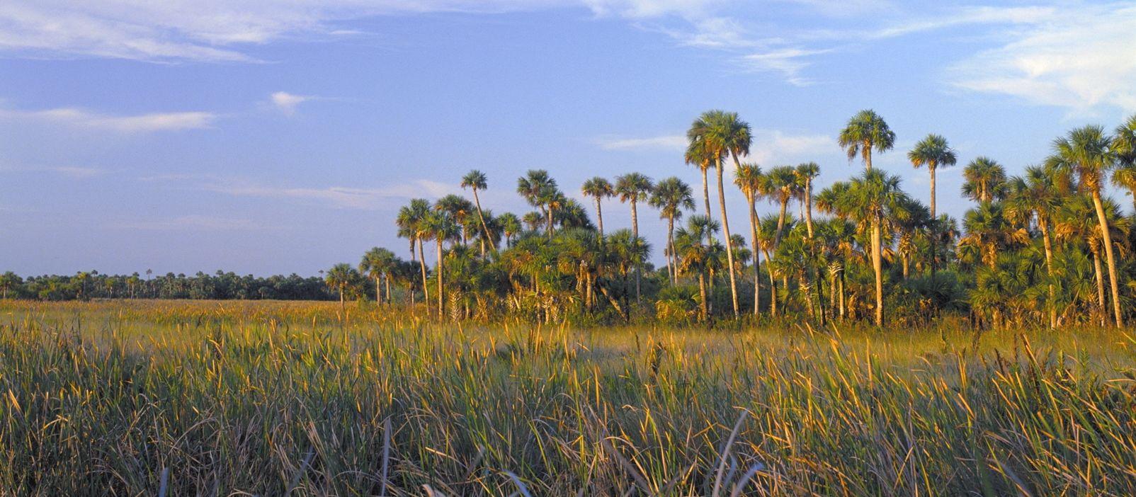 Impressionen Everglades