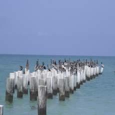Vögel am Fort Myers Beach