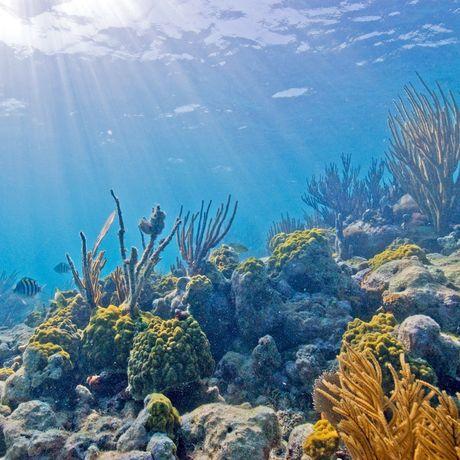 Im Biscayne National Underwater Park