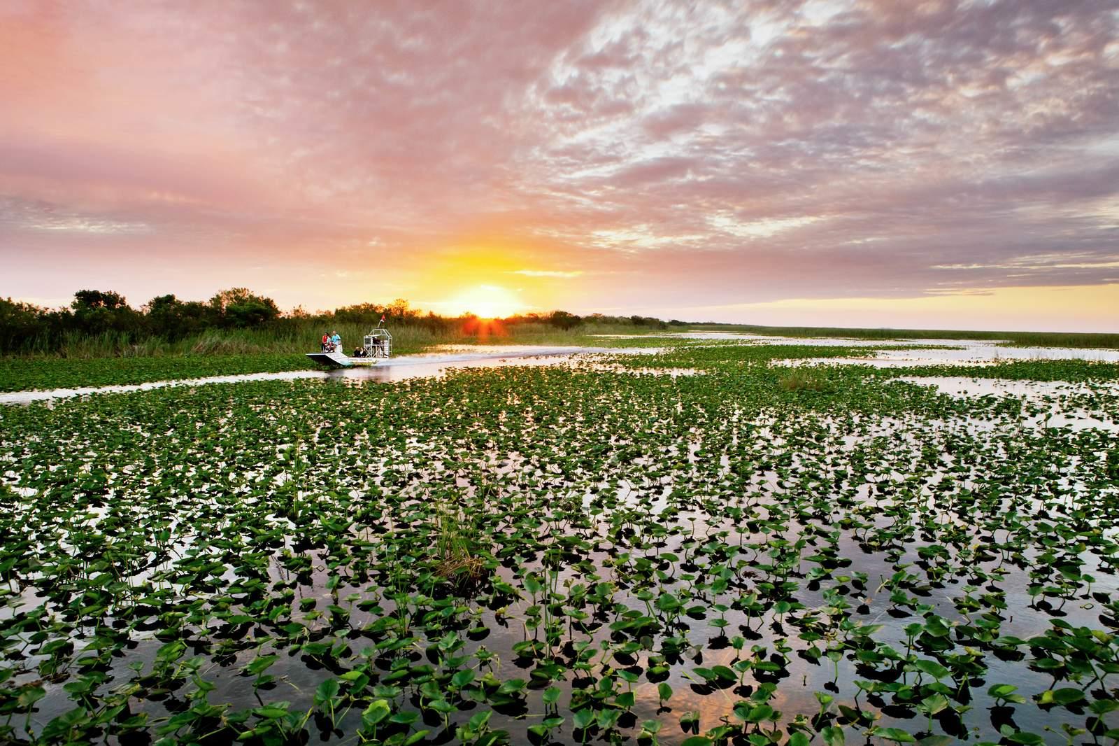 Everglades, das große Sumpfgebiet