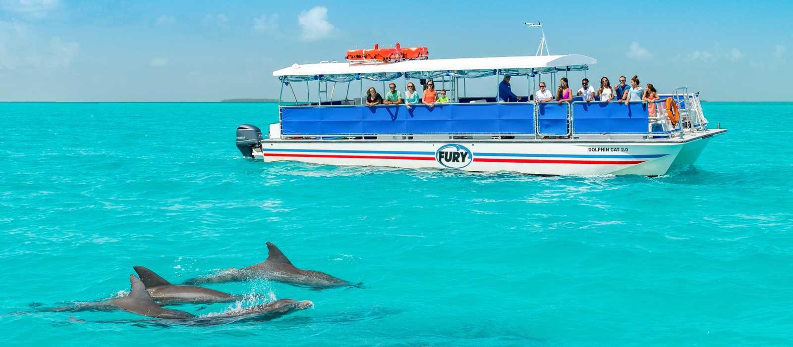 Auf dem Fury Katamaran Delfine aus nächste Nähe erleben