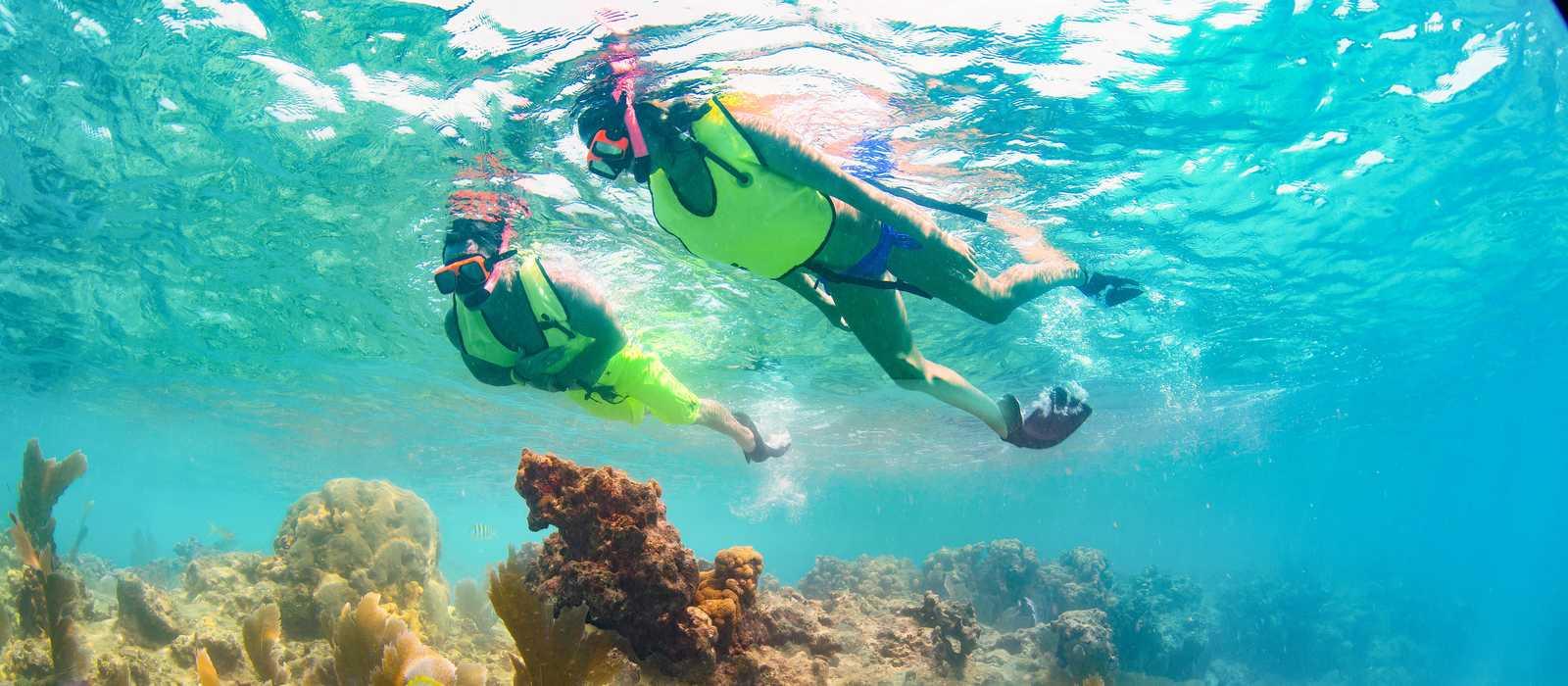 Bei einer Schnorcheltour das Korallenriff von Key West bestaunen