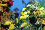 Tauchen im Korallenriff
