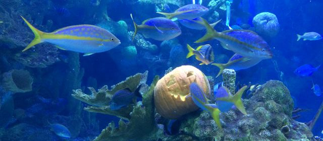 Halloween im Aquarium vom Phillip and Patricia Frost Museum of Science