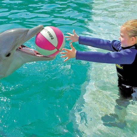 Kind und Delfin im Miami Seaquarium
