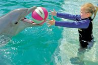 Miami Urlaub, Delphine erleben
