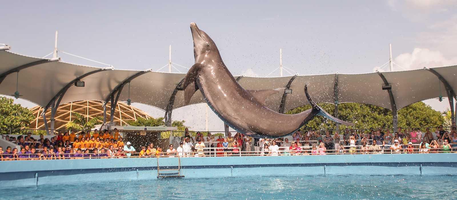 Impression des Miami Seaquarium